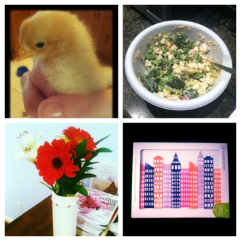 Clockwise from top left: One of the baby chicks my dad just bought (so cute!); a skinny broccoli salad recipe I tried out for the first time (via Skinny Mom); a fresh spring bouquet; and new stationery that I'm way too excited about.